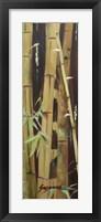 Framed Bamboo Finale II