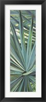 Framed Fan Palm I