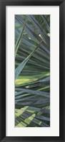 Framed Fan Palm II