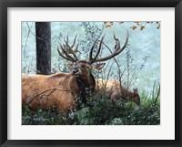 Framed Elk Foraging