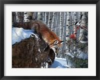 Framed Fox in Winter