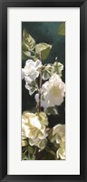 Framed White Roses IV