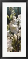 Framed White Roses V