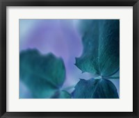 Framed Intricacies II