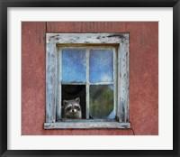Framed Raccoon Window
