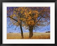 Framed Yellow Elm
