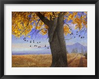 Framed Yellow Cottonwood
