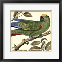 Framed Tropical Parrot I