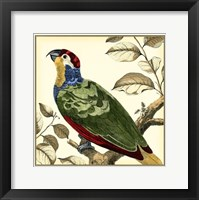 Framed Tropical Parrot II