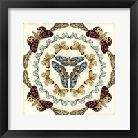 Butterfly Collector IV Framed Print