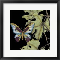 Butterfly on Vine I Framed Print
