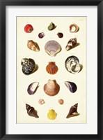 Framed Shells, Tab. XI