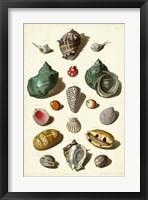 Framed Shells, Tab. V