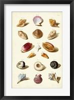 Framed Shells, Tab. VI