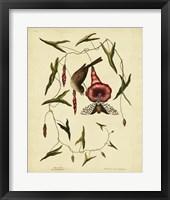 Framed Little Sparrow, Pl. T35
