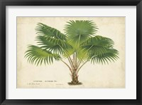 Framed Palm of the Tropics V