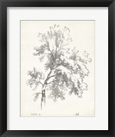 Framed Ash Tree Study