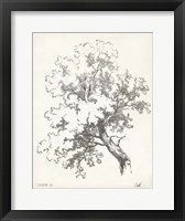 Framed Oak Tree Study