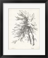 Framed Beech Tree Study