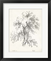 Framed Birch Tree Study