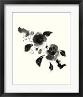 Framed Studies in Ink - Camellia