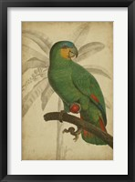 Framed Parrot and Palm I