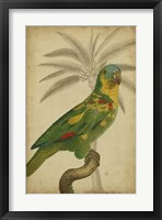 Framed Parrot and Palm II