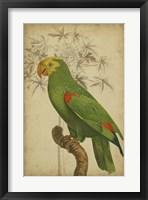 Framed Parrot and Palm III