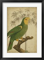 Framed Parrot and Palm IV