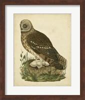 Framed Antique Nozeman Owl I