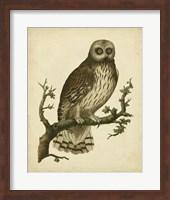 Framed Antique Nozeman Owl II