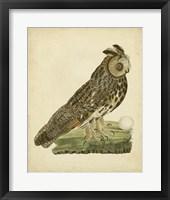 Framed Antique Nozeman Owl III