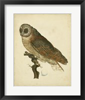 Framed Antique Nozeman Owl IV