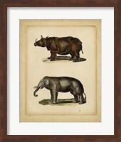 Framed Studies in Natural History III