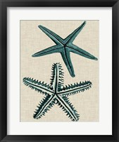 Framed Coastal Starfish I
