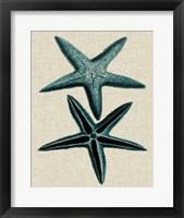 Framed Coastal Starfish III