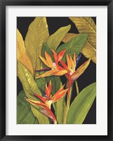 Framed Dramatic Bird of Paradise