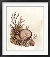 Baroque Nautilus III Framed Print