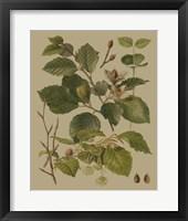 Framed Forest Foliage III