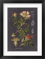 Framed Midnight Botanical I
