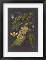 Framed Midnight Botanical II