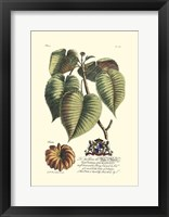 Framed Royal Botanical I