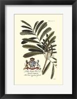 Framed Royal Botanical III