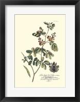 Framed Royal Botanical IV