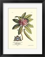 Framed Royal Botanical V
