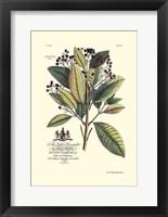 Framed Royal Botanical VI