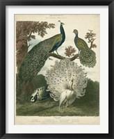 Framed Peacock Gathering