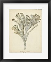 Framed Coral Collection I