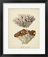 Framed Coral Collection II