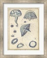 Framed Medusa I